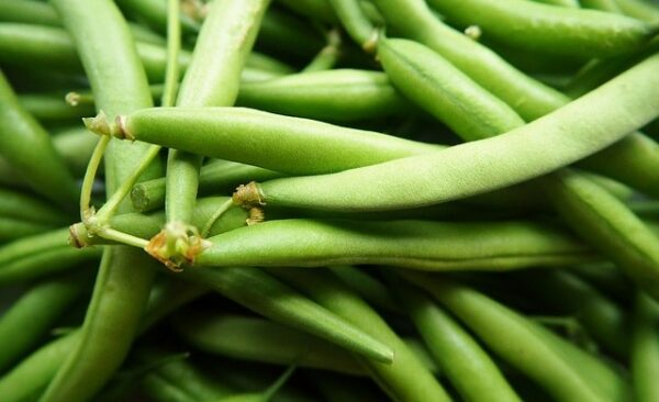 Haricots verts biologiques