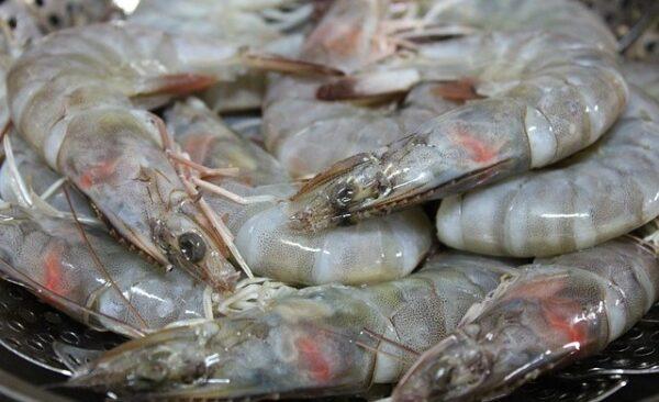 Crevettes tigrées noires naturelles crues pelées